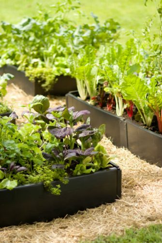 Read more about the article Raised Beds – Part 1- Materials