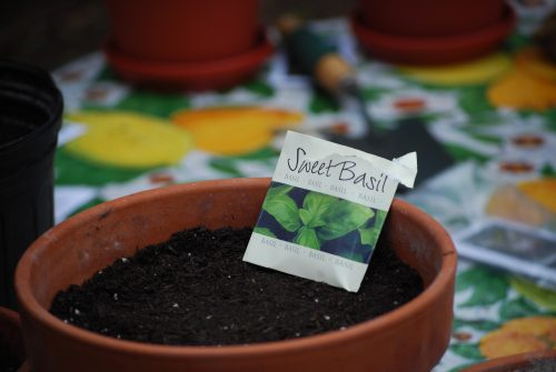 Read more about the article Small Space and Container Gardening Class Review