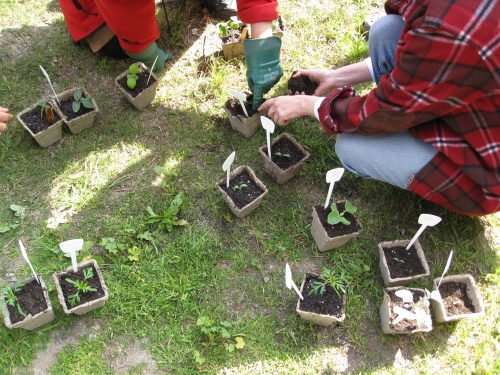Read more about the article Seed-Starting, Transplants and Heirlooms Class Review
