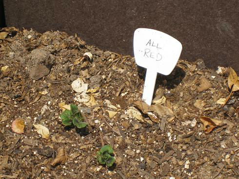 Read more about the article YouTube: Planting Potatoes in Pots