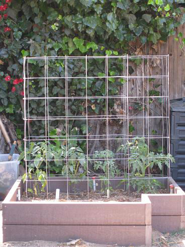 Read more about the article Makin' Tomato Cages