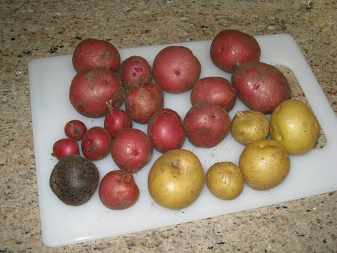 Read more about the article …3 Potato