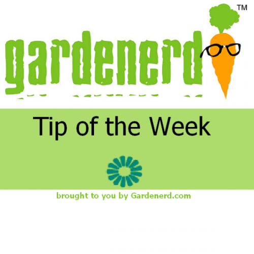 Read more about the article Gardenerd Tip of the Week Podcast