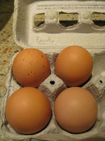 Read more about the article Using Eggshells in Your Garden