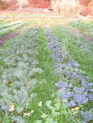 Read more about the article The Gardens of Esalen