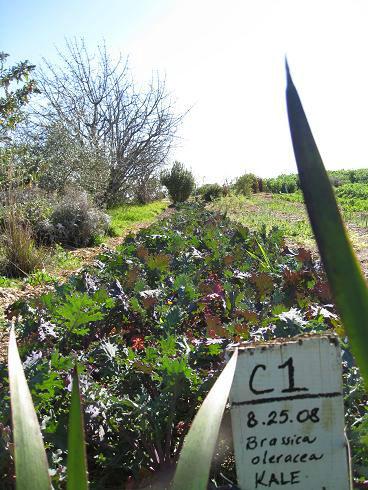 Read more about the article Eco-Farm in Santa Cruz