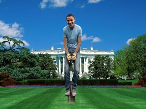 Read more about the article White House to Install a Vegetable Garden