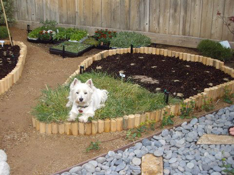 Read more about the article Japanese / Vegetable Garden in Sierra Madre