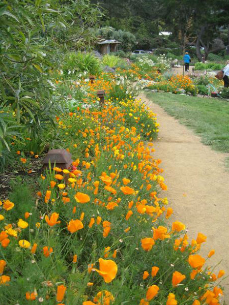 You are currently viewing Gardenerd at Esalen