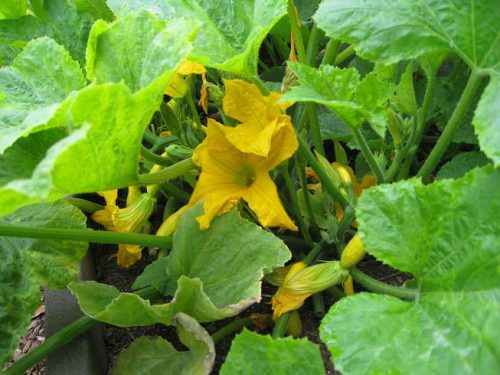 Read more about the article Houston, We Have Some Squash