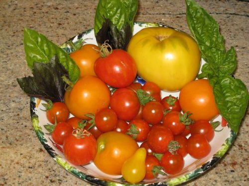 Read more about the article First Summer Harvest