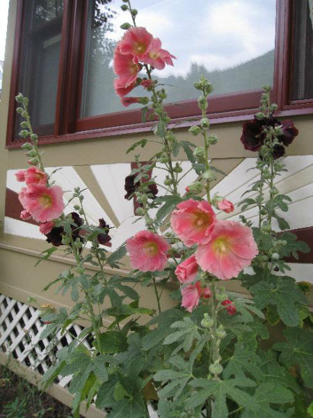 Read more about the article Gardens of Telluride