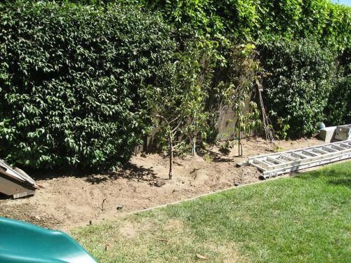 Read more about the article Gardenerd at Large – Planting Fall Gardens