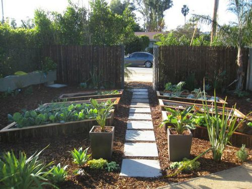 Read more about the article Malibu Vegetable Garden Delight