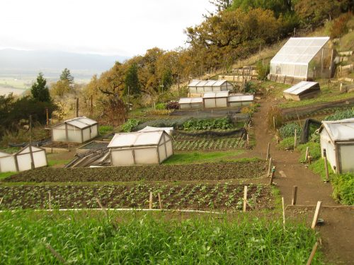 Read more about the article Ecology Action Farm