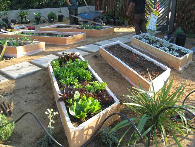 Gardenerd Organic Edible Gardening Malibu Vegetable Garden Delight