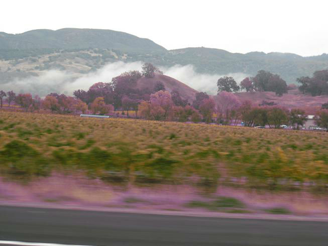 You are currently viewing Field Trip: Napa Valley