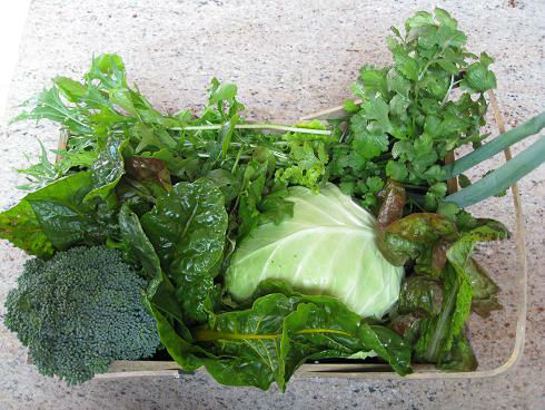 Read more about the article What To Do With All That Cabbage?