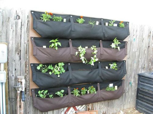 Read more about the article Woolly Pocket Wall Garden