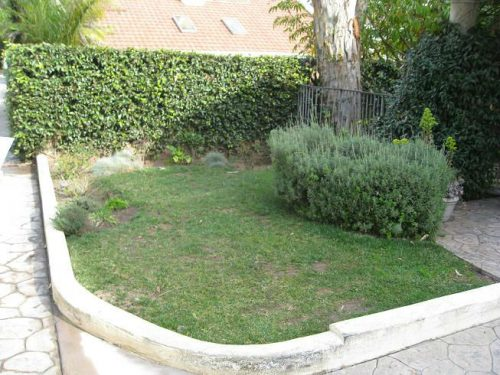 Read more about the article Front Yard Veggies in Manhattan Beach