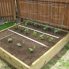 Read more about the article Paying Your Gardening Skills Forward – by guest blogger Greg Holdsworth