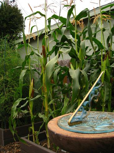 Read more about the article Gardenerd Potluck Makes the LA Times