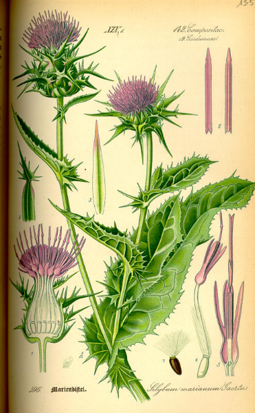 milk_thistle_herb