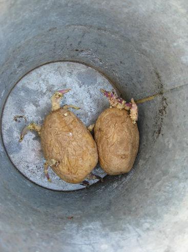scarypotatoes