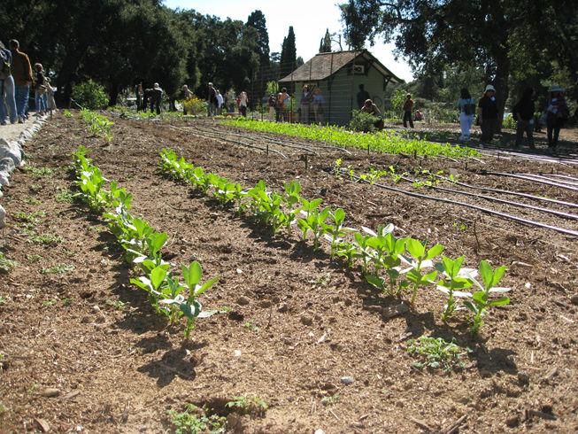 farmsection