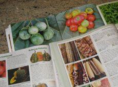 catalogs1