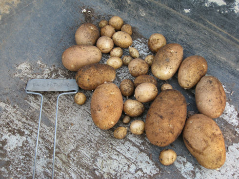 You are currently viewing When 1+1=10: Harvesting Potatoes