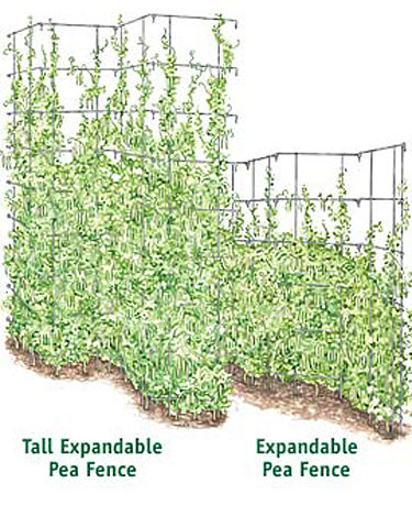 Gardenerd Organic Edible Gardening My What Trellises