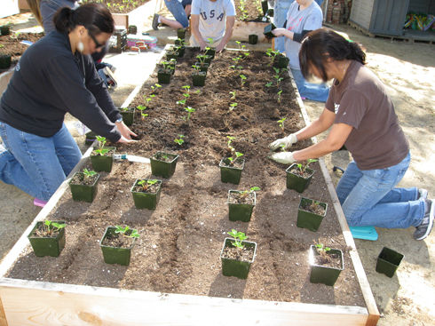 Read more about the article Dream Center Garden Progress