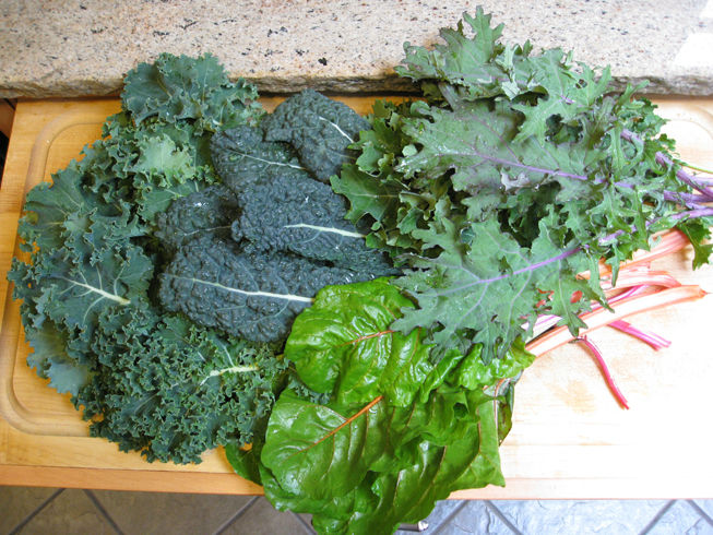 You are currently viewing Growing Kale – Ironman of the Garden