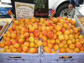 Read more about the article Apricots are in Season at the Farmers' Market