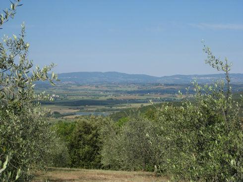 oliveorchard