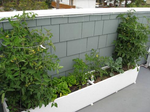 rooftopgarden1