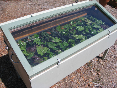 Read more about the article Making Kale Chips – Solar vs. Oven