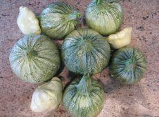 zucchiniandpattypansquash