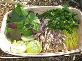 Read more about the article Help Out a Community Garden