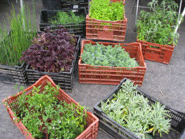 Read more about the article Farmers' Market Nurseries