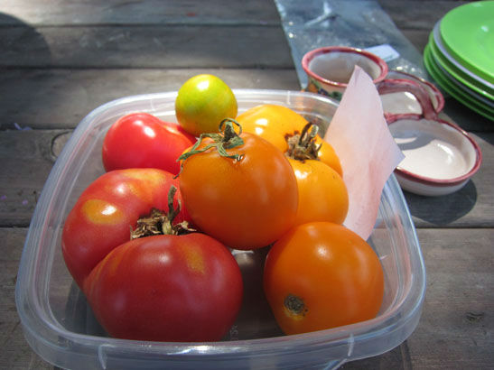 ourtomatoes