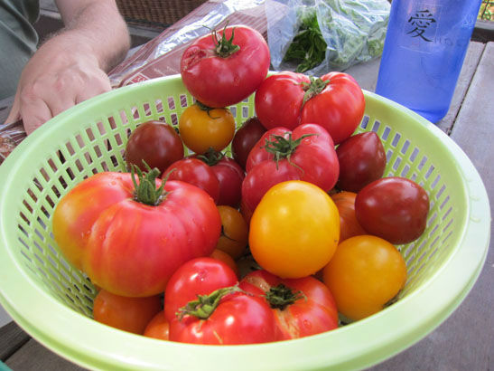 You are currently viewing Tomato Tasting Party – Everybody Wins!