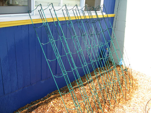 Read more about the article Fall Clean Up – Cleaning Tomato Cages