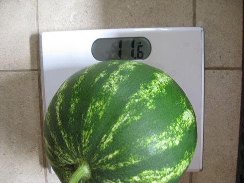 heavywatermelon
