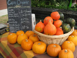 Read more about the article Fall is All About Winter Squash