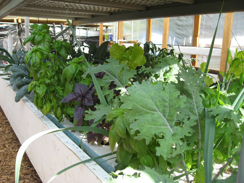 Read more about the article Aquaponics: A Field Trip to EVO Farm (Now Ourfoods)