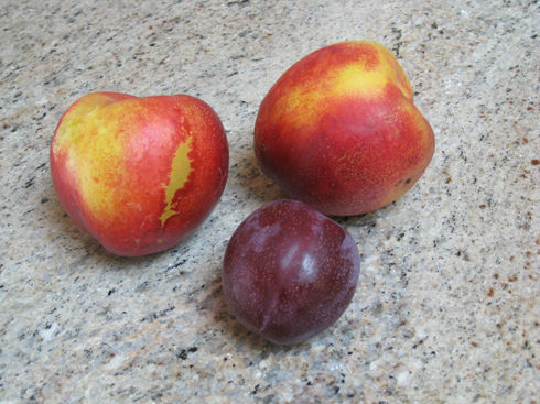 Read more about the article Chill Hours: Choosing the Right Fruit Tree