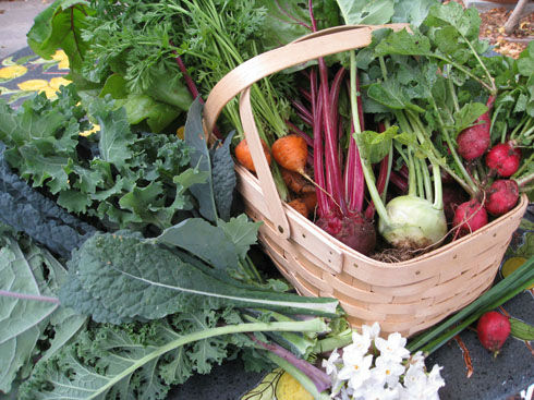 Read more about the article After Vacation Harvesting 2011…and meal ideas
