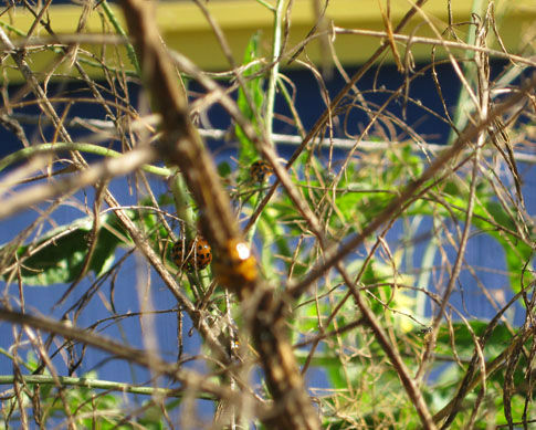 Read more about the article Pruning Asparagus
